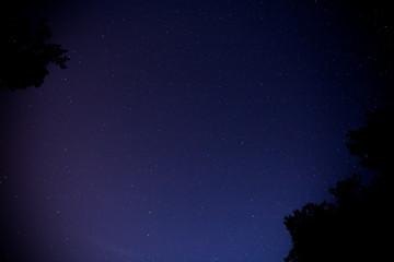 Sternenhimmel zwischen Bäumen