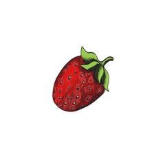 Sketch strawberry