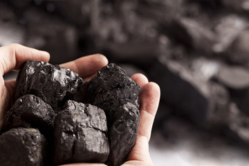 Two white hands holding lumps of black coal in focus
