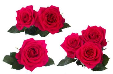 set  dark pink roses