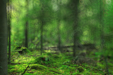 summer forest blurred texture background bokeh