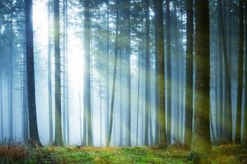 Photo sur Aluminium Bestsellers Sun shining through fog in the forest