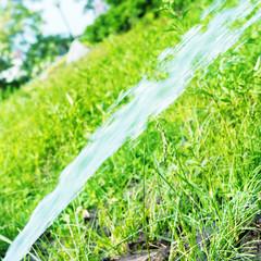 Sprinkler watering the green lawn