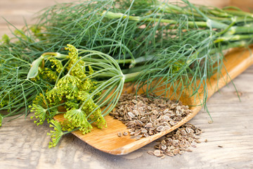 dill and seeds on a wooden spoon