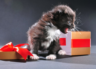 black kitten from present holiday box