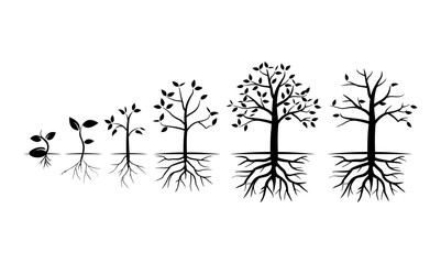 Tree Grow in Various Stage - Vector Illustration