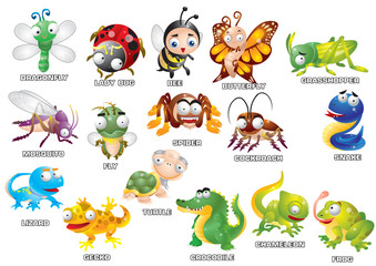 set of insect and reptile