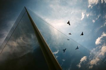 Flight of birds reflection on a glass building.