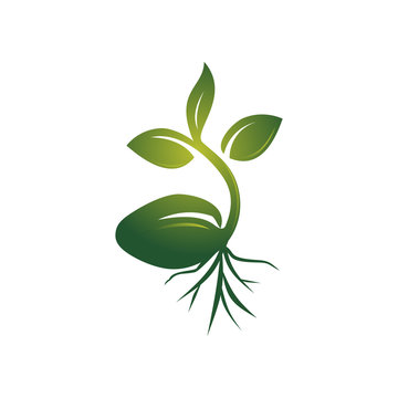 Realistic Sprout Seed Grow Vector Illustration