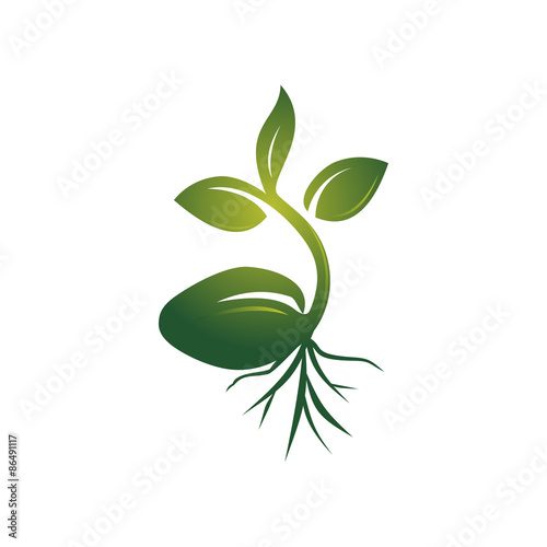 quotrealistic sprout seed grow vector illustrationquot stock