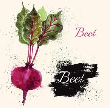 Beet in watercolor technique