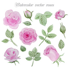 Watercolor roses elements set, leaves and flowers.