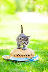 Little kitten on a hat