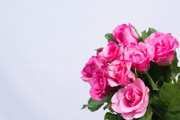 Background image of pink roses.