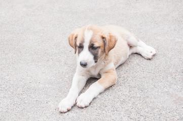 the little puppy dog