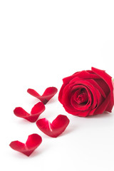 red rose with rose petal