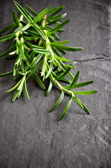 Fresh green rosemary on black background, selective focus