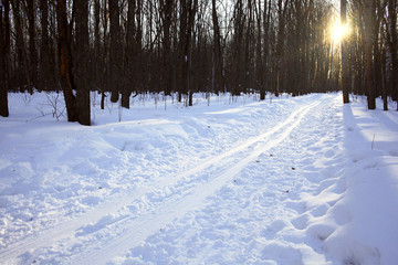 Winter forest landscape on a sunny day