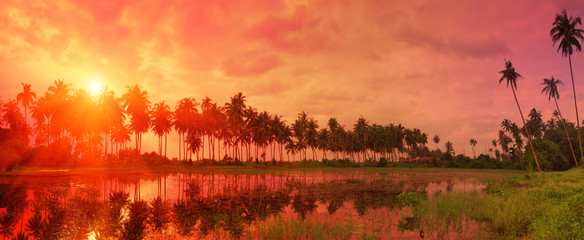 Colorful tropical landscape with twilight sky and palm trees ref