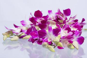Orchid purple.