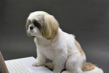 パソコンと愛犬