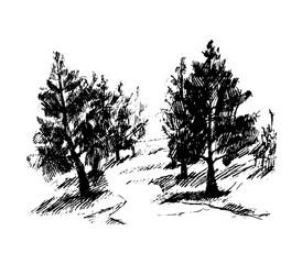 Forest, vector illustration