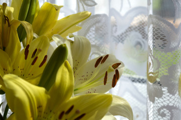 Canvas Print - Yellow and white lilies near the window