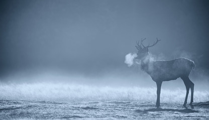 Wall Mural - Red deer Stag silhouette in the morning mist