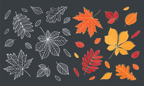 Fall of the leaves. Autumn leaves are drawn with chalk on black chalkboard. Set of different leaves of trees. Sketch, design elements. Vector illustration.