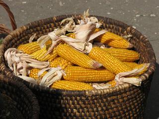 Yellow corn cobs in basket