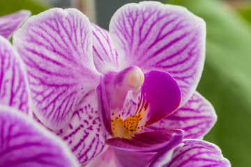pink flowers orchid close-up