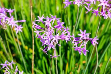 Bright violet flowers