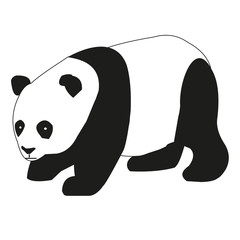 Pandabär, Panda