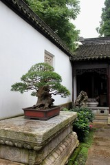 Zhujiajiao - Townhouse Bonsai - 03