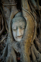 Buddha head covered by roots of a tree at Ayutthaya province in Thailand