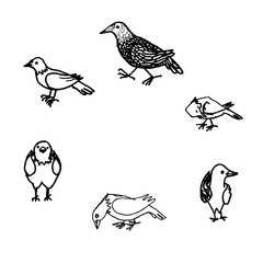 Ink handdrawn pictures of birds on white background