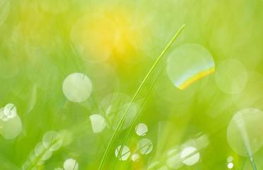 Lichter im Gras, Niedersachsen, Deutschland