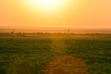 Agriculture sunset landscape