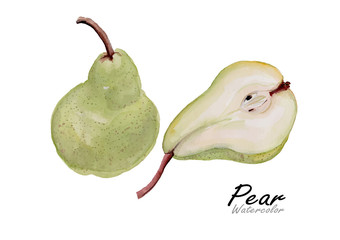 Pears set.Hand drawn watercolor painting on white background .Green pear.Vector illustration