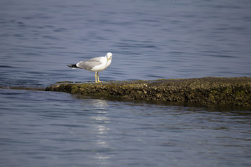 seagull standing on a concrete breakwater