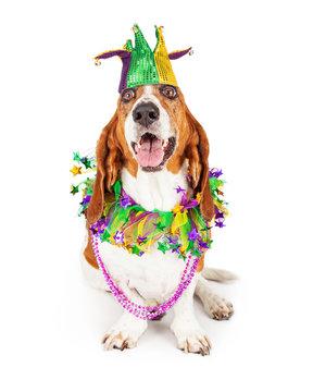 Mardi Gras Party Dog