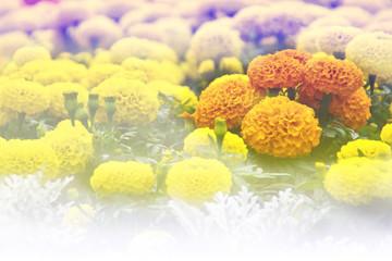 Orange flowers in yellow.
