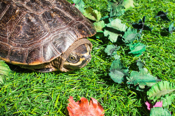 turtle on green grass texture background eco concept, asia, thai