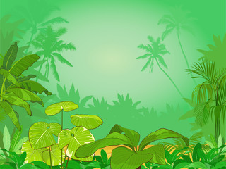 Vector illustration of  tropical rainforest