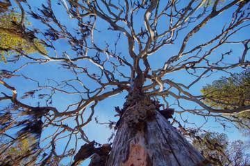 dense forest with lichen borodinym