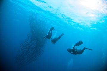 mackerel barracuda kingfish diver blue scuba diving bunaken indonesia ocean