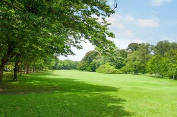 green grass field in big city park - fototapety na wymiar