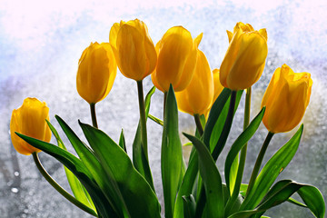 yellow tulips in a vase on the window background