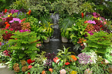 Colorful tropical garden