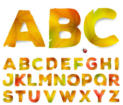 Vector alphabet letters made from autumn leaves, isolated on white